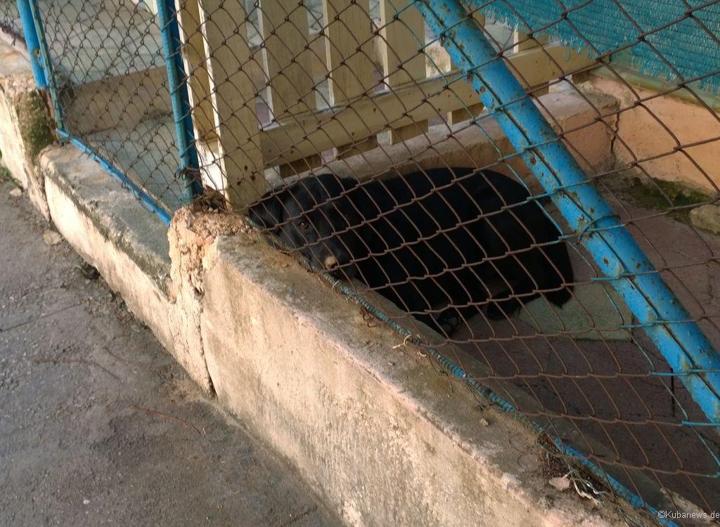 Bild: Schläfriger Hund in Varadero