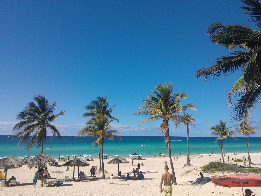 Bild: Palmen an der Playa del Este