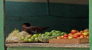 Kubanews: Bauernmärkte zur Versorgung mit Obst und Gemüse