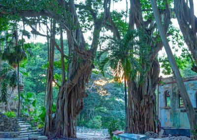 Alte Bäumen und altes Gemäuer sind zu bewundern