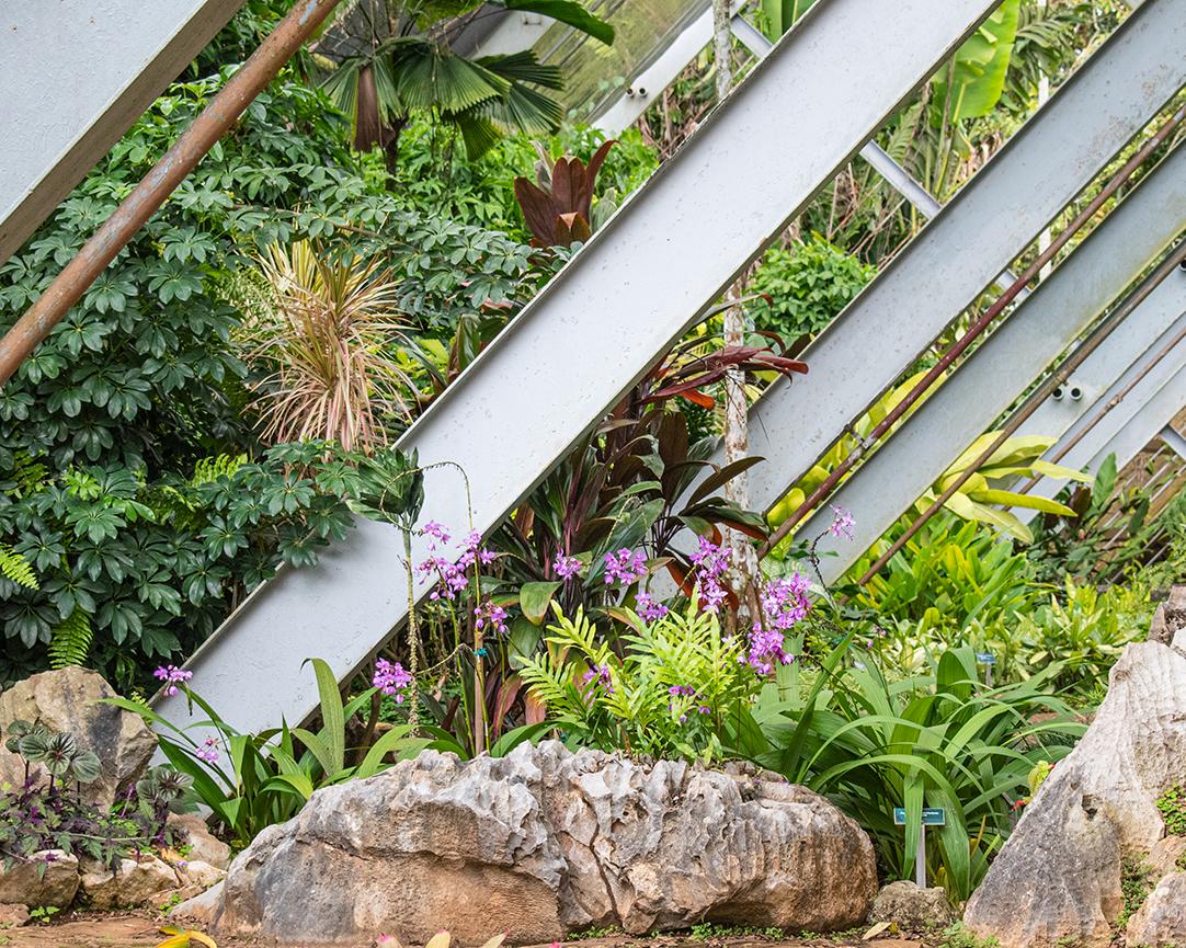 Kubanews: Orchideen im Gewächshaus