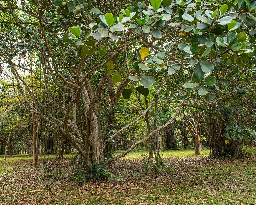 Kubanews: Wald der Nordküste