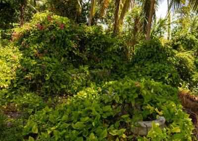 kubanews: Die Voliere für die Tiere der Villa