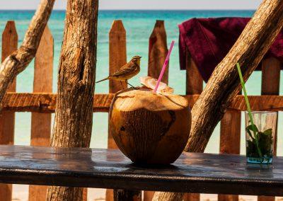 Schnpasdrossel mit Rum