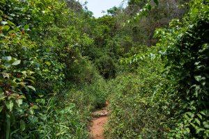 Kubanews: Pfad zum Ausblick oberhalb des Mural de la Prehistoria